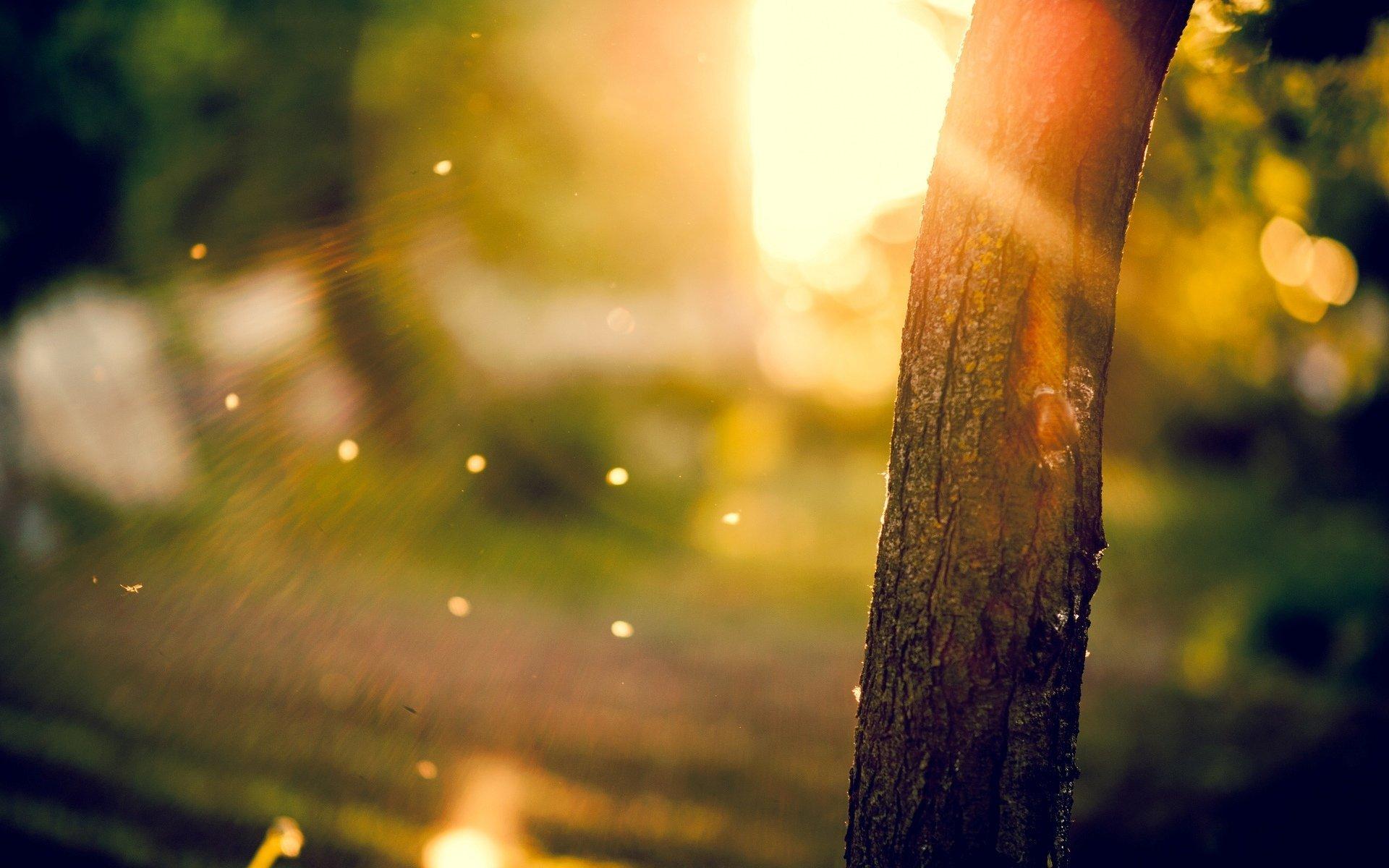 Close Up Tree Tree Trunk Bark Blur Tree Sun Rays Bokeh