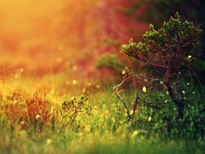 Nature-Plants-l